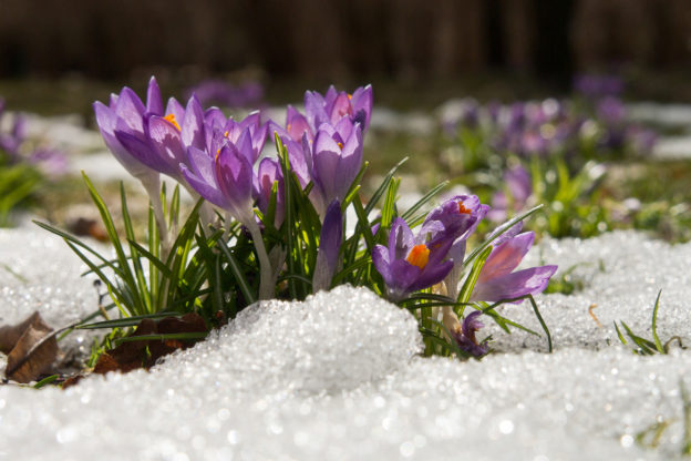 Frühlingsanfang: Wann ist Frühling?