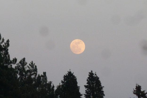 Wann ist Vollmond? Mondphasen Überblick