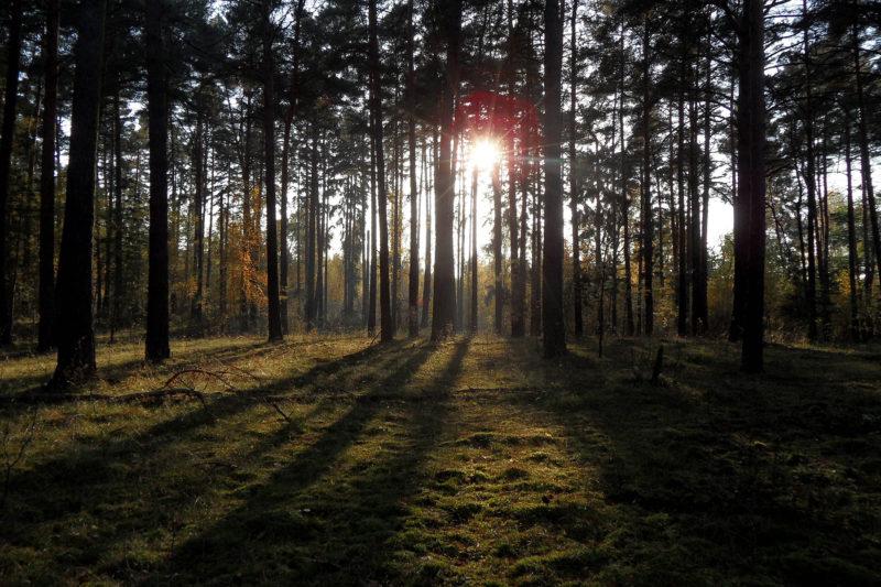 Wann ist Pilzzeit? Pilze sammeln Wald