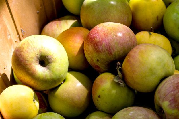 Äpfel / Apfelernte - Wann ist Apfelzeit?